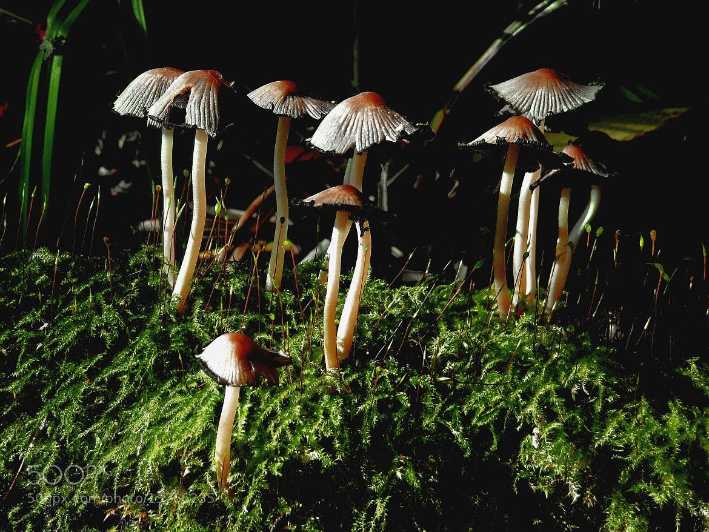 Photograph Pilztreffen by Jan Ramon  Fischer on 500px