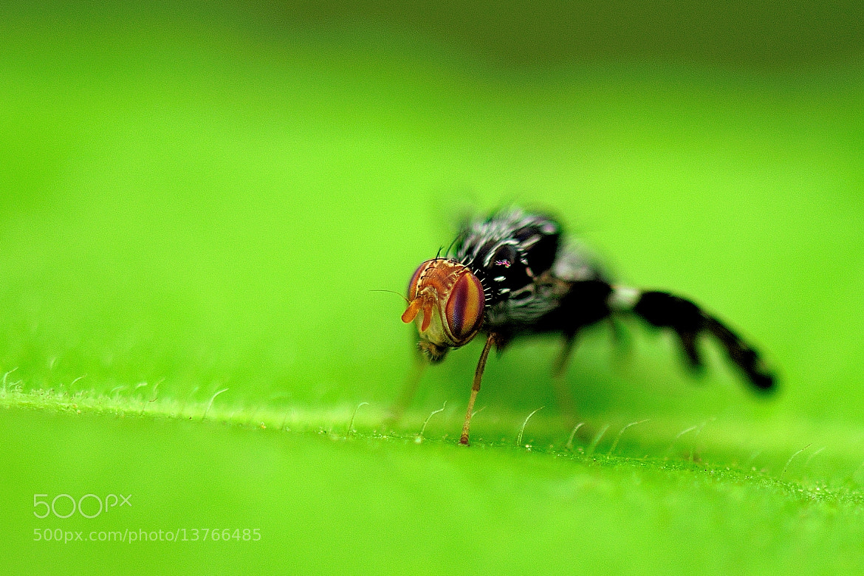 Photograph learn macro lens by AdIee Suryanata on 500px