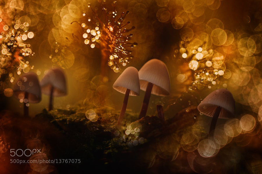 Photograph Autumn-fairy by Wil Mijer on 500px