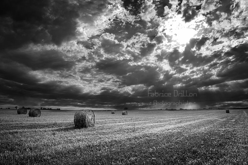 Photograph Untitled by Fabrice Drillon-Photographiste on 500px