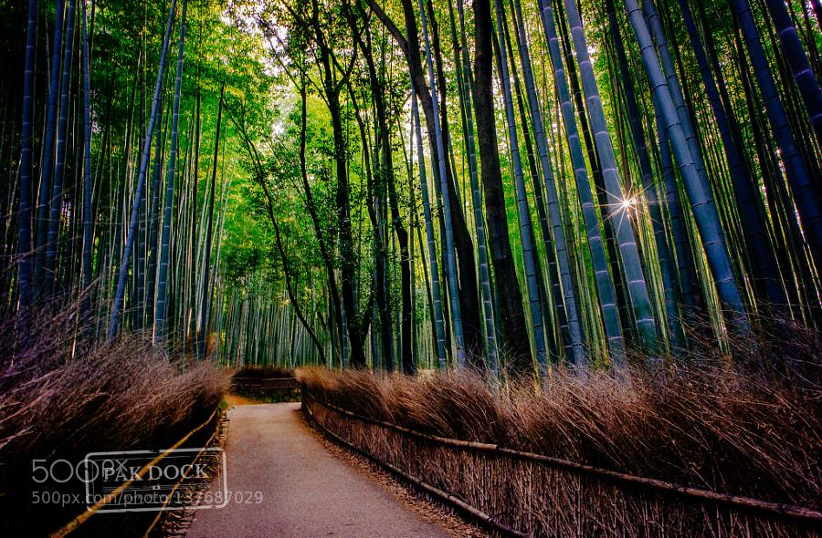 Sunny Arashiyama
