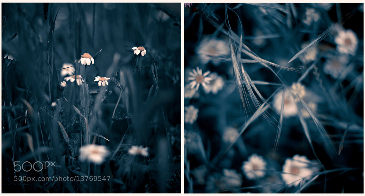 Photograph Blue Diptych by Luis Mariano González on 500px