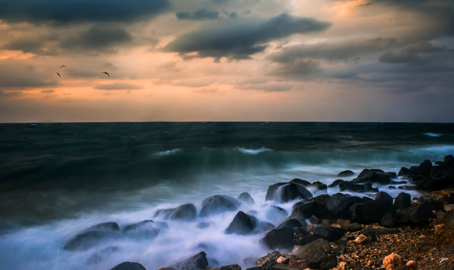 Gust of emotion by sherin atrouni on 500px.com