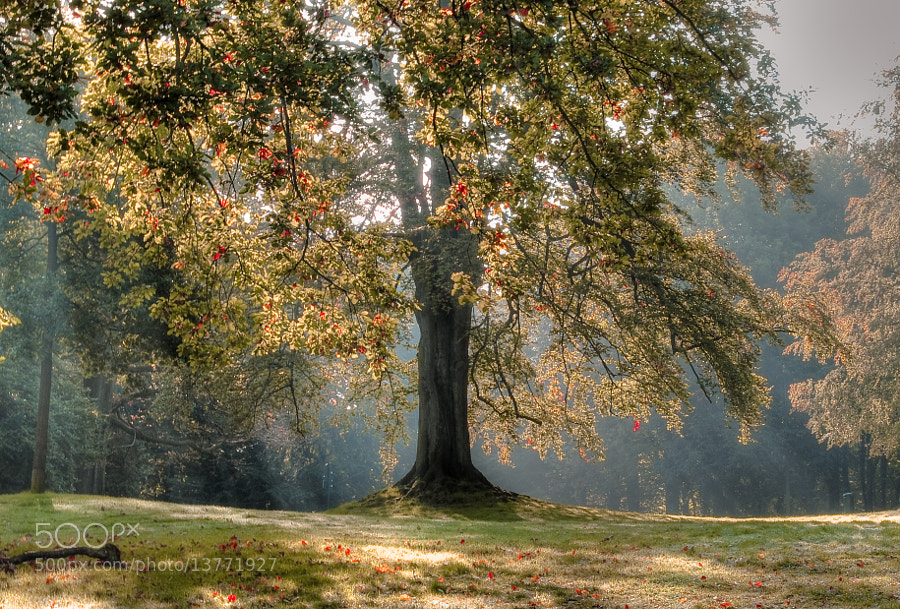 Photograph Magie d'automne by nadine Drumel on 500px