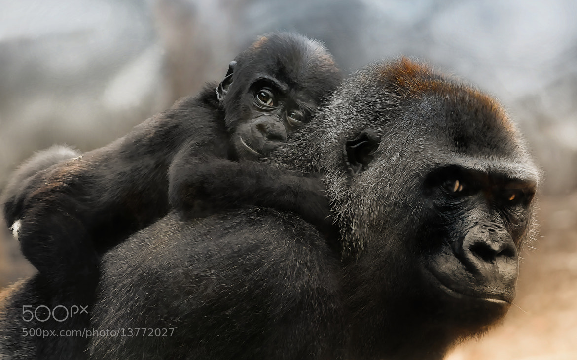 Photograph Junior by Sonja Probst on 500px