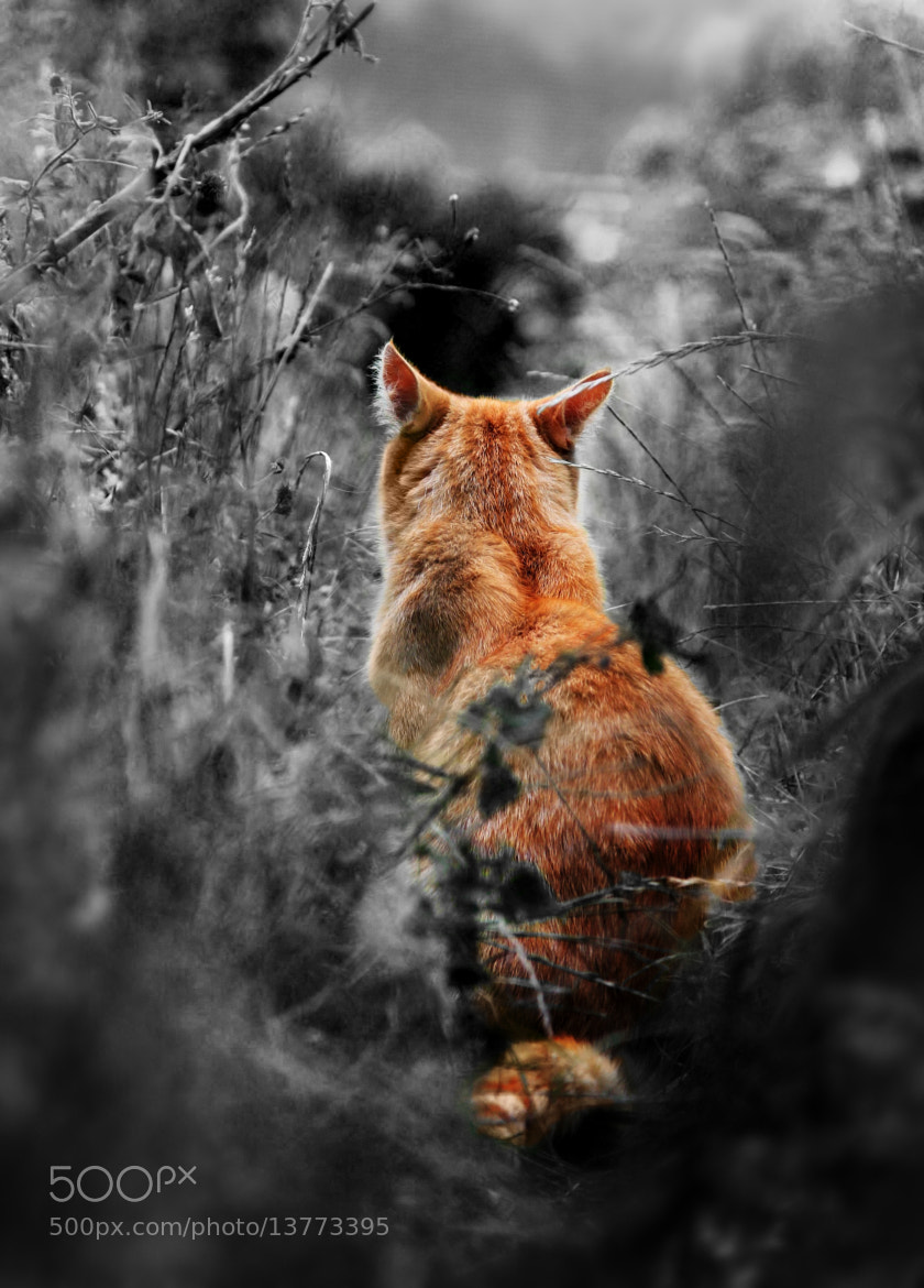 Photograph Feral V2 by Jack  Pidduck on 500px