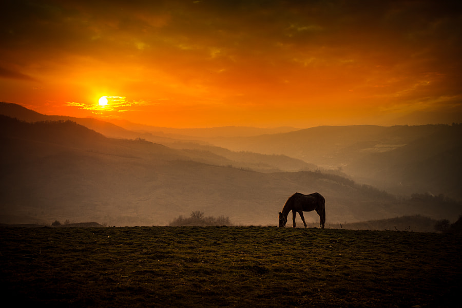 al pascolo by stefano giacomini on 500px.com