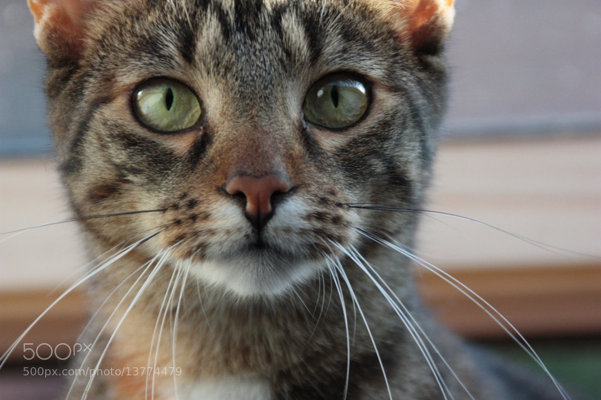 Photograph Lucy by Kate Mueller on 500px