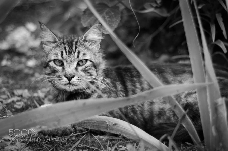 Mini-lynx by Marvin Yorke (marvin_yorke) on 500px.com