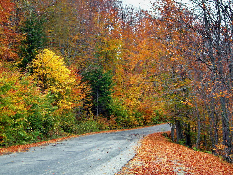 Photograph autumn colors by tugba kiper on 500px