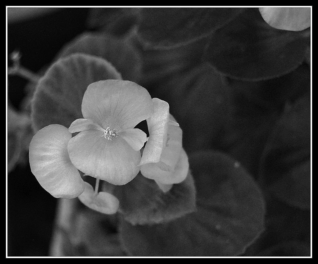 Photograph Black and white beauty by mc rr on 500px