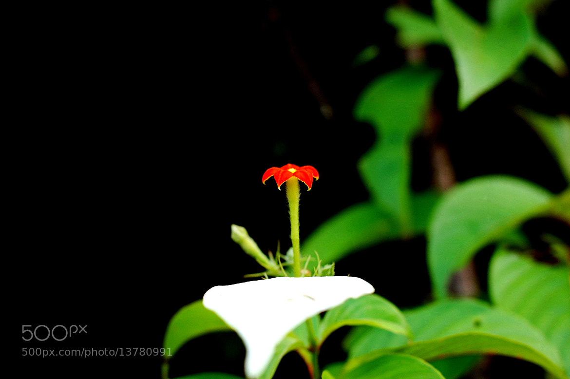 Photograph I am Alone by Ramesh Hegde on 500px