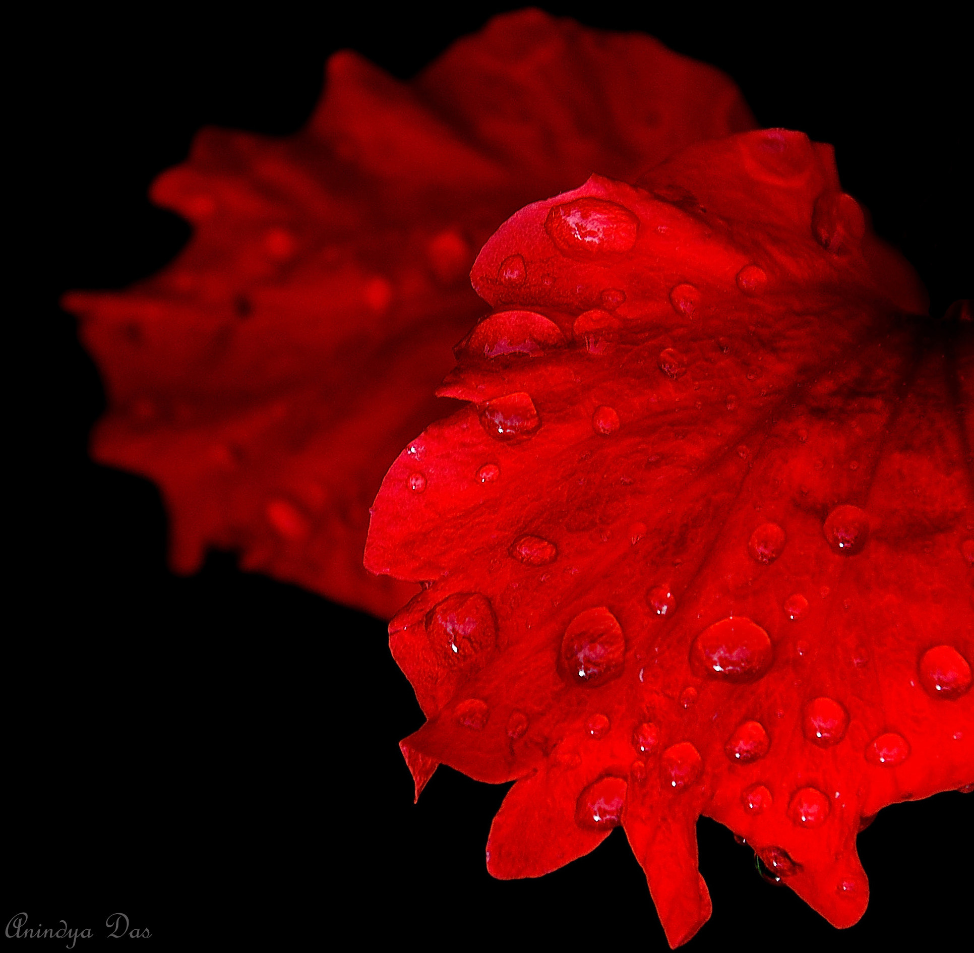 Photograph Tears of Nature by Anindya Das on 500px