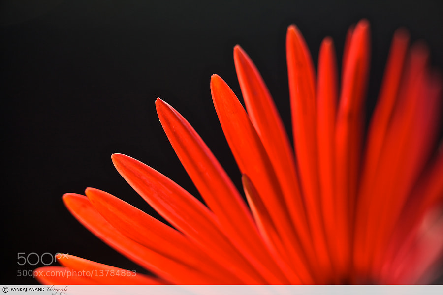 Photograph Flora by Pankaj Anand Gupta on 500px