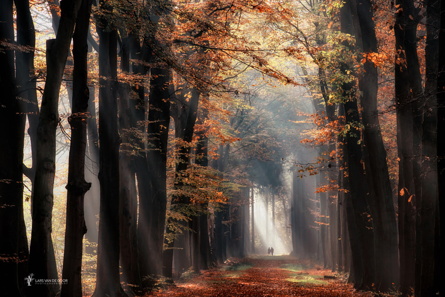 in the spotlight by Lars van de Goor on 500px.com
