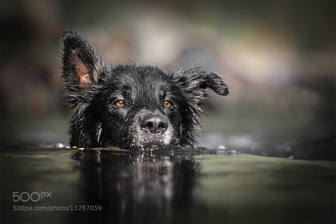 Photograph  critical water level by Mathias Ahrens on 500px