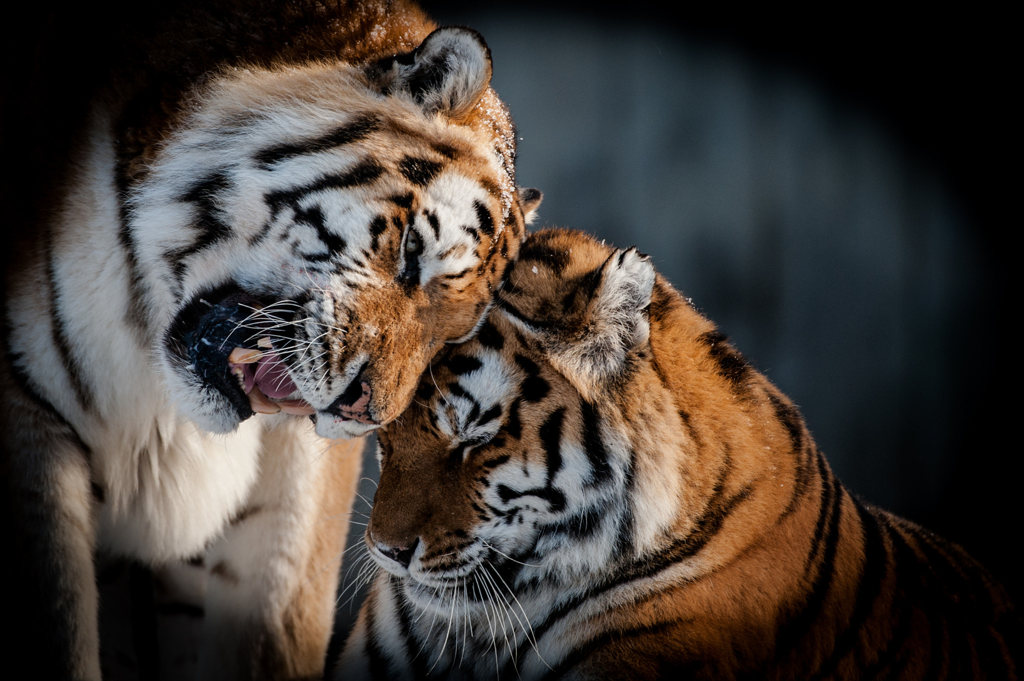 Photograph More L♥ve by Peter Hausner Hansen on 500px