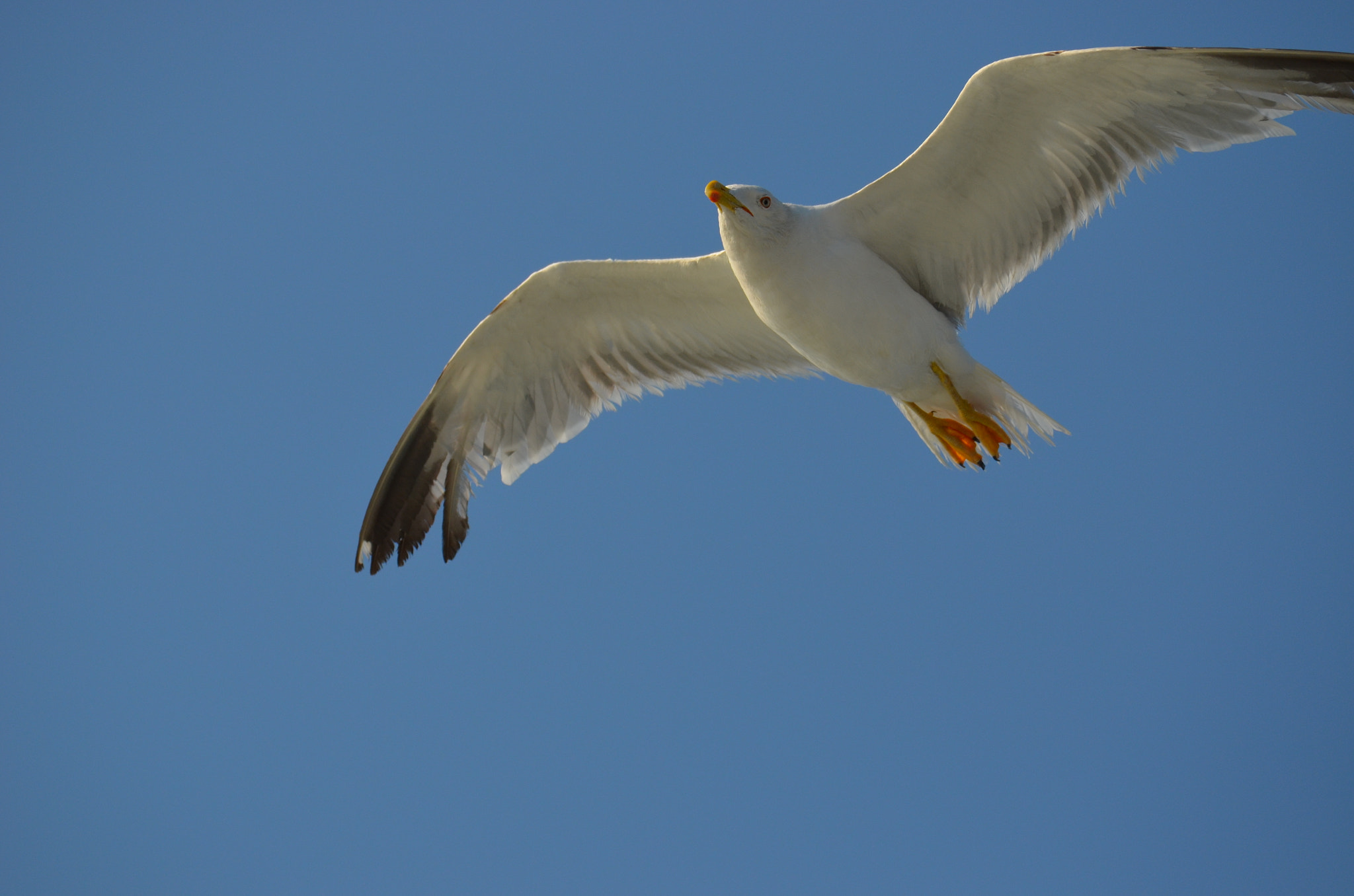 Photograph A seagull by Mehmet Ergin on 500px