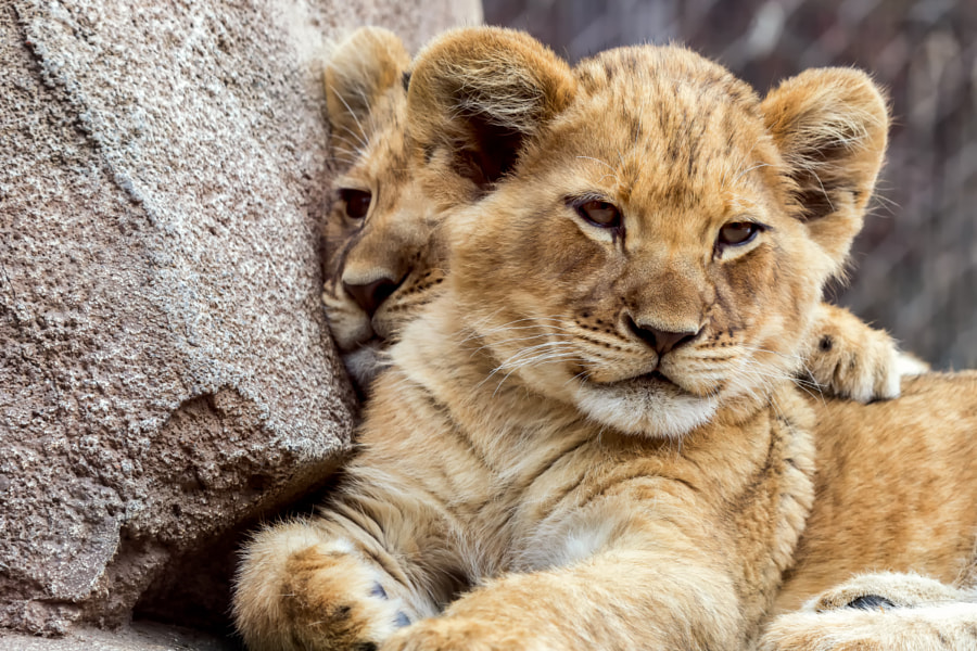 The Sibling Bond by Theodore (Ted) Stark on 500px.com