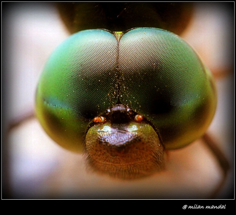 Photograph Head and compound eye of a dragonfly. by Milan Mandal on 500px