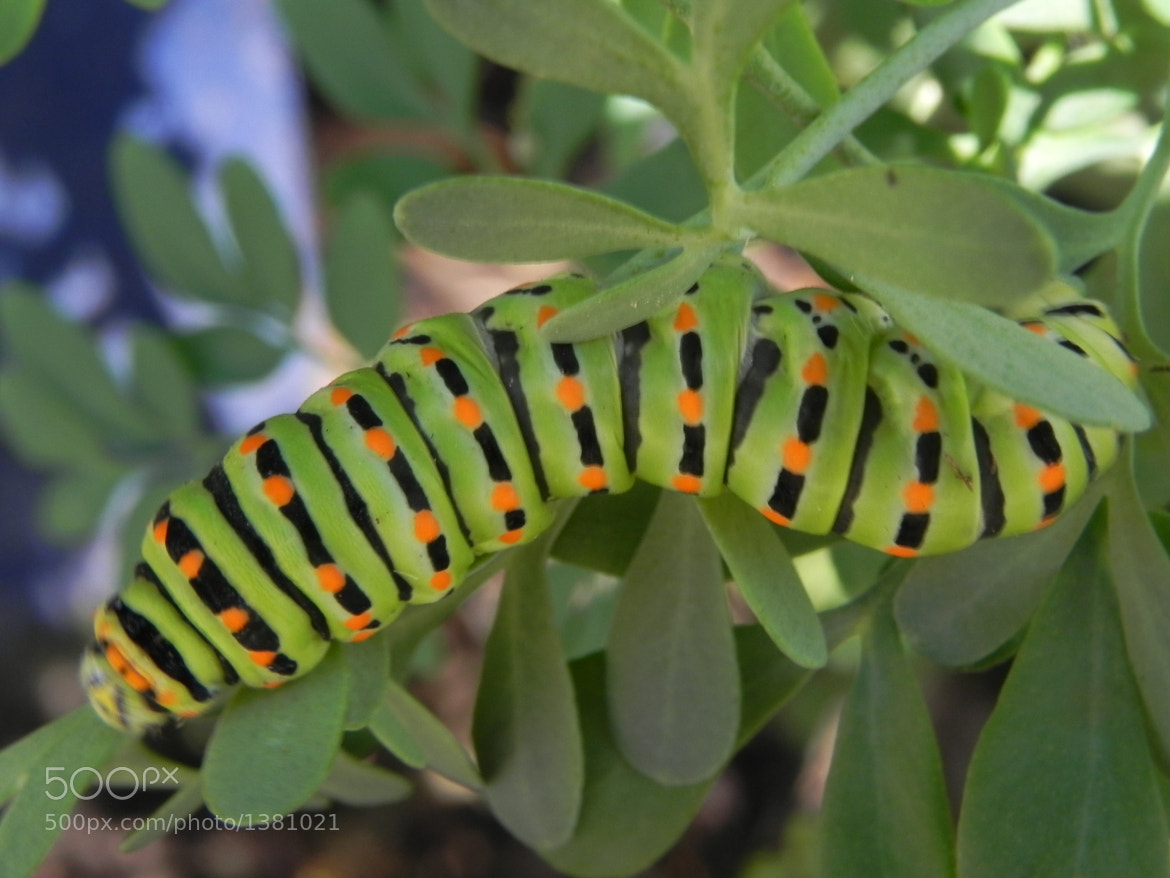 Photograph colored larva by Liora Levin on 500px