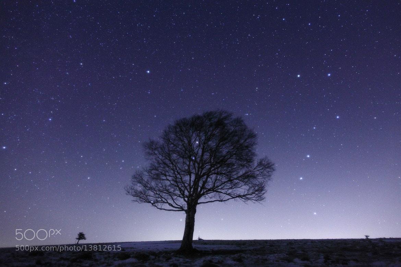 Photograph Untitled by Noriko Tabuchi on 500px