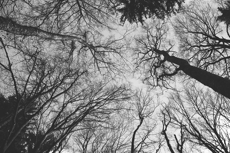 The Soul In The Trees