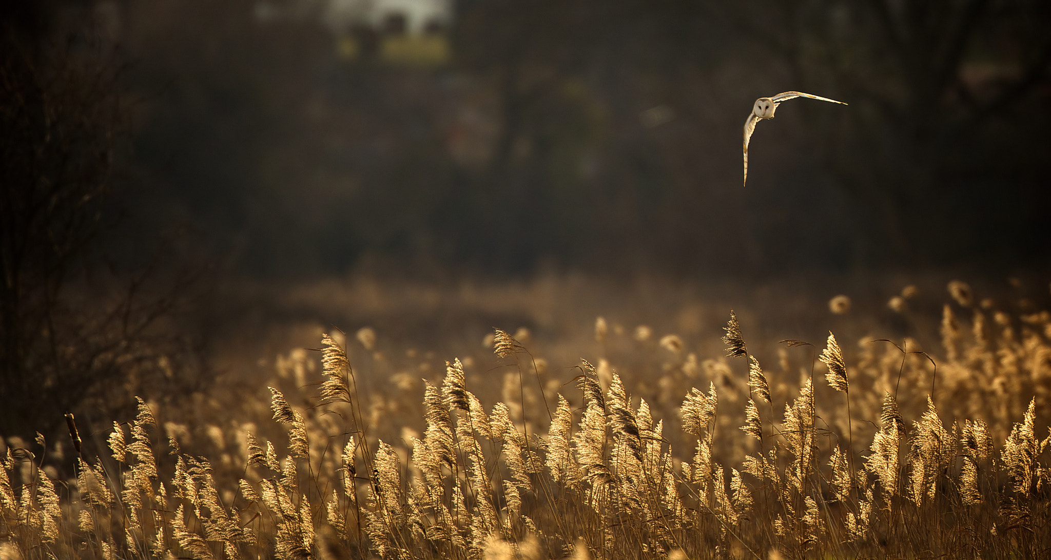 Photograph hunting at dusk by Mark Bridger on 500px