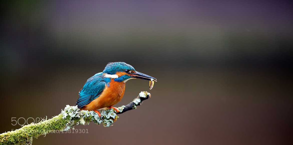 Photograph little fishy by Mark Bridger on 500px