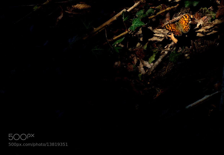 Photograph sous le rayon de soleil by Frédéric Chaix on 500px