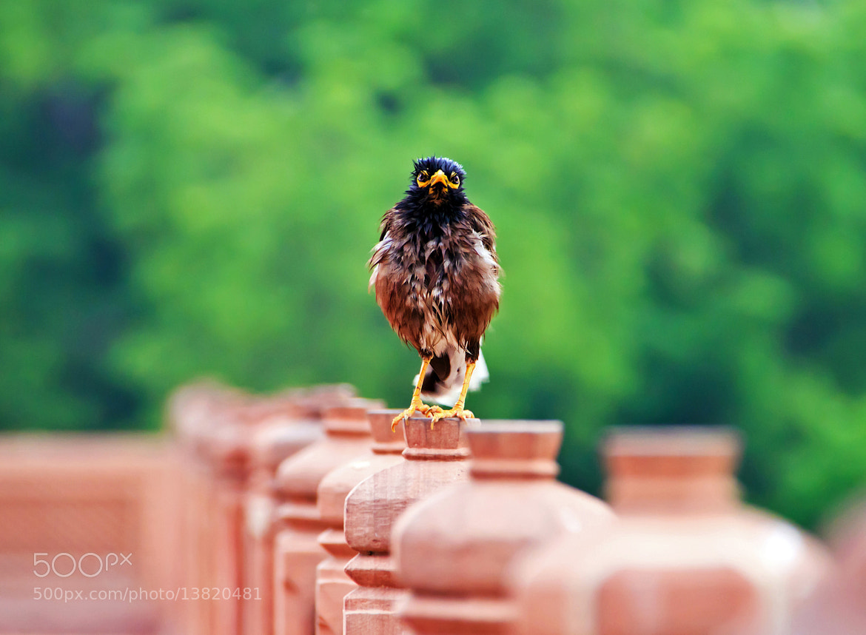 Photograph Angry Bird ! by Charlie Joe on 500px