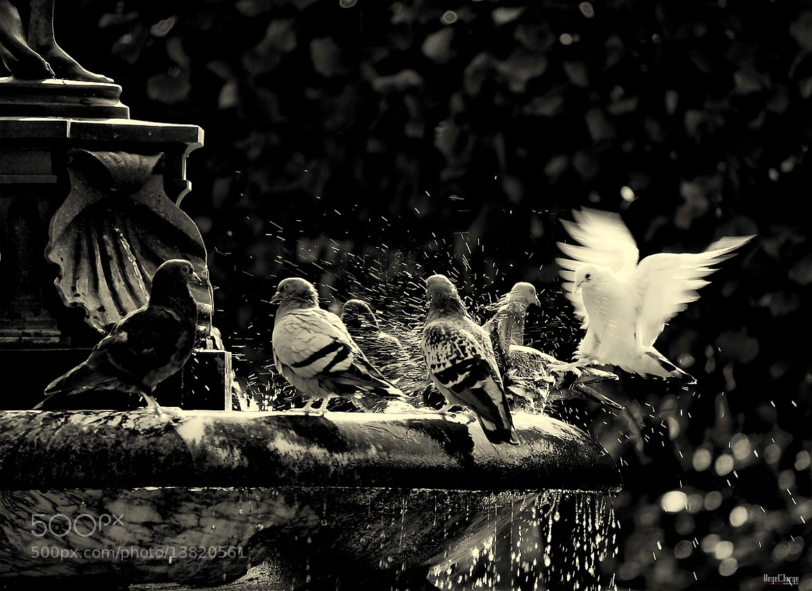 Photograph fortune sides with those who dare by Hegel Jorge on 500px
