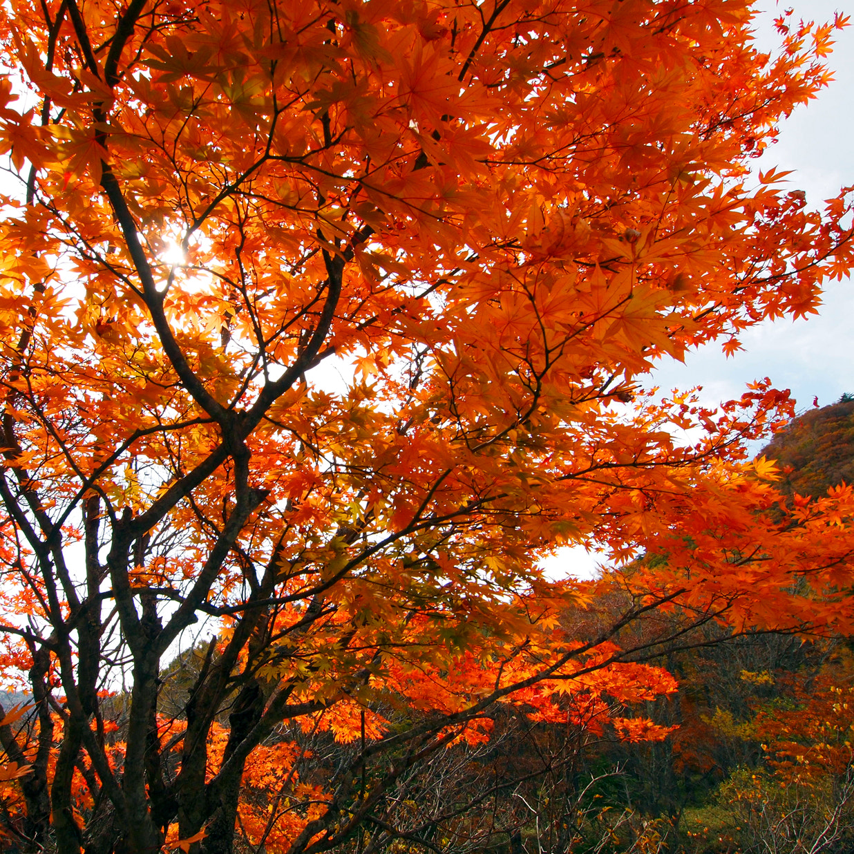 Photograph Autumn Color in Japan by Athi Aachawaradt on 500px