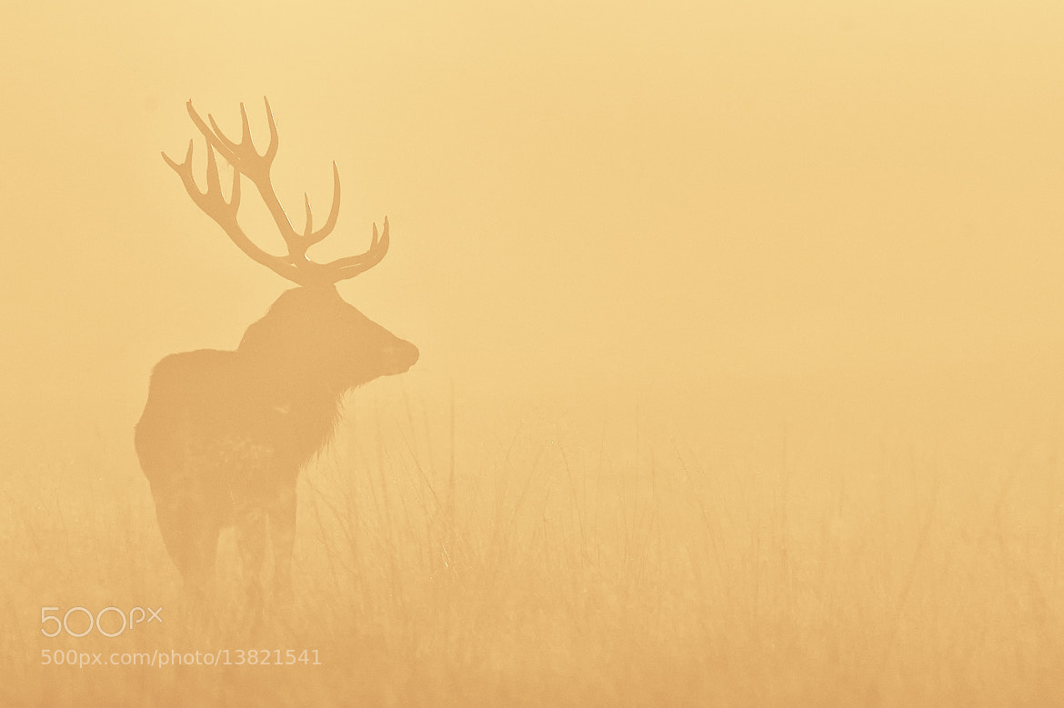 Photograph yellow by Mark Bridger on 500px