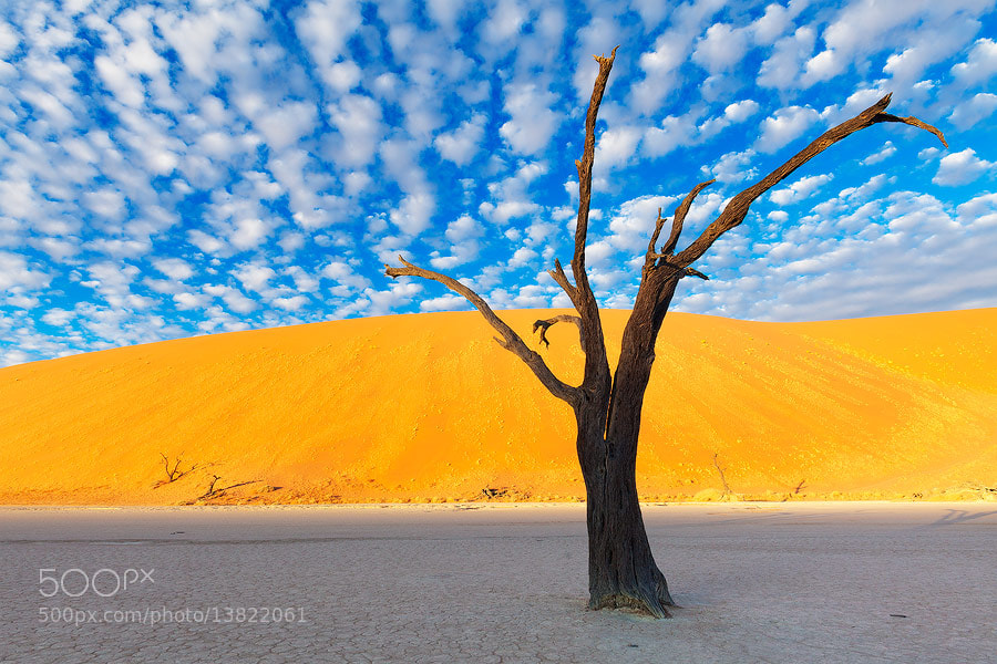 Photograph Iconic Deadvlei by Hougaard Malan on 500px