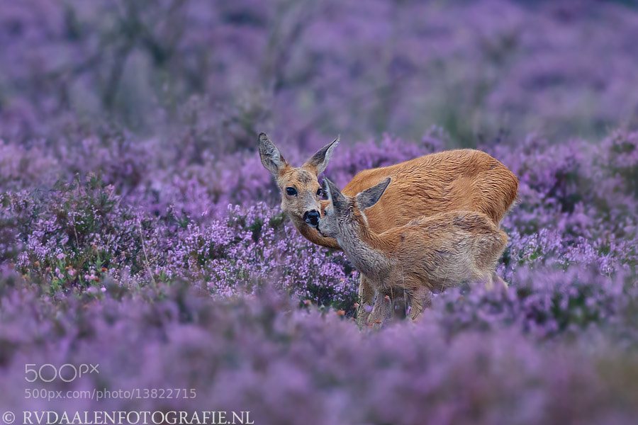Photograph Lovely shot!!!! by Remco van Daalen on 500px
