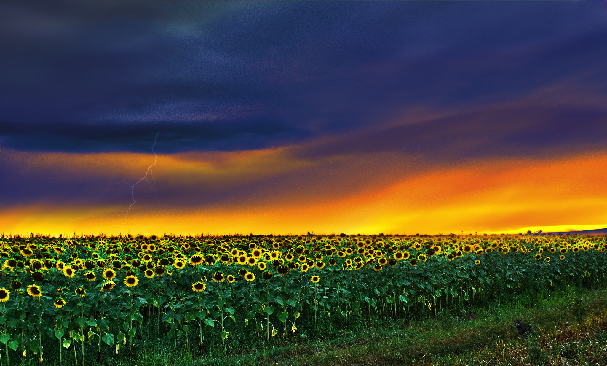 Photograph Sunflowers by David Bugyi on 500px