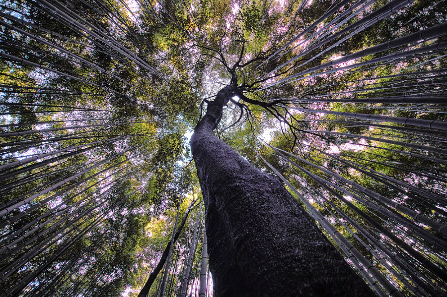 Master of the Forest by Azul Obscura on 500px.com