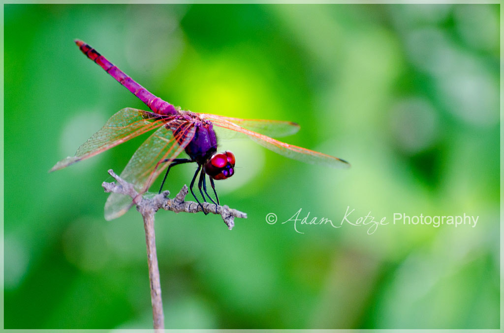 Photograph Rested Wings by Adam & Samantha Kotze on 500px