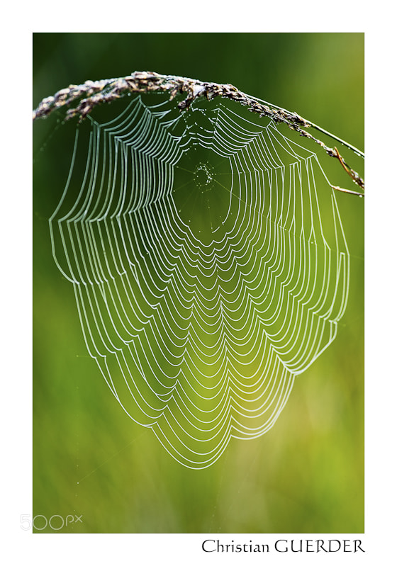 Photograph spider web by CHRISTIAN GUERDER on 500px