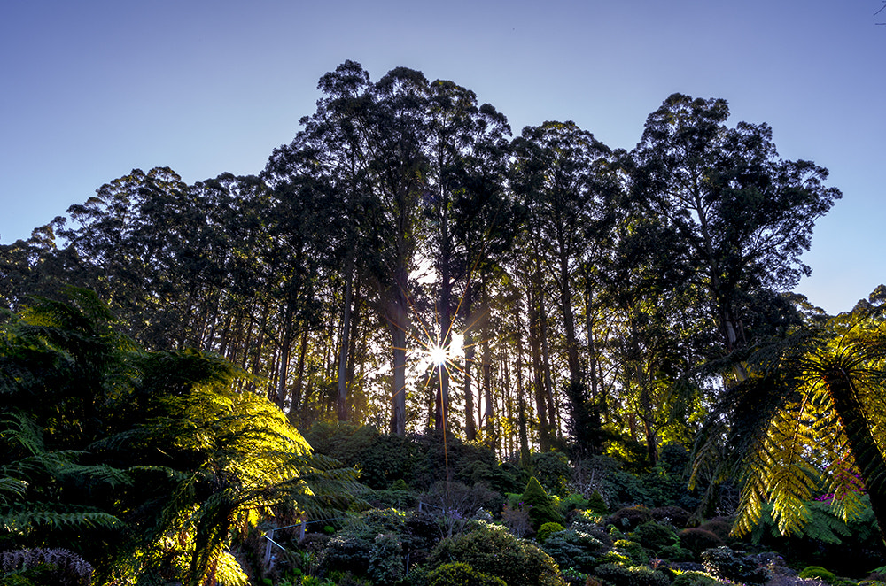 Photograph Shining Forest by Chris Wang on 500px