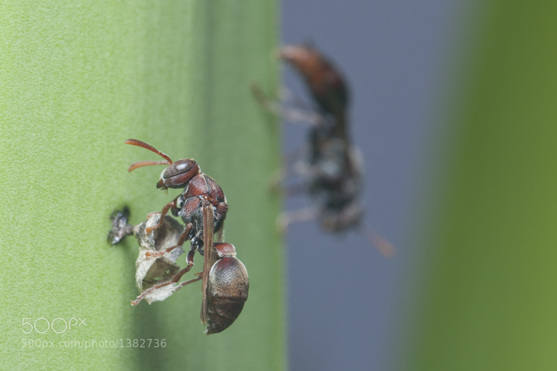 Photograph Wasp Builders by Robert  Whiteley on 500px
