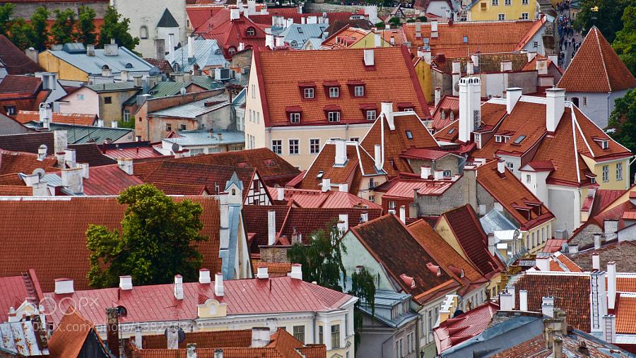 Tallinn roofs