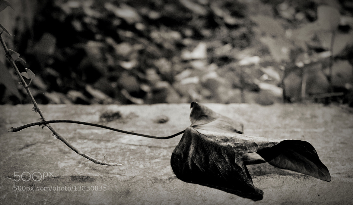 Photograph The audible smile of the leaves by Analua Zoé on 500px