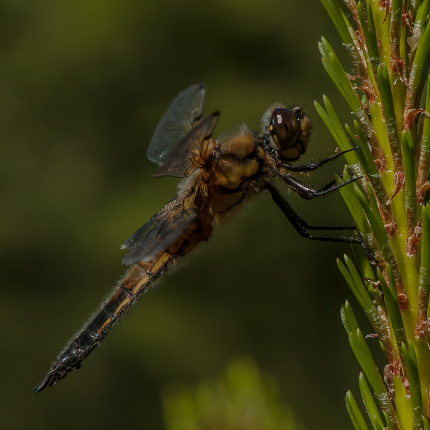 Photograph Dragonfly by jorgen norgaard on 500px