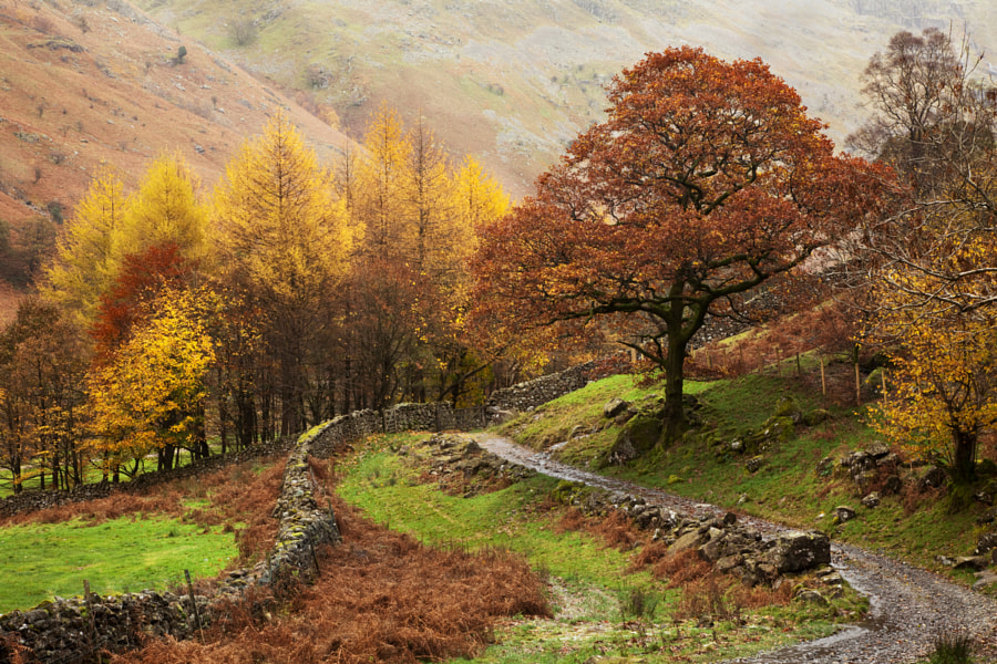 Langstrath valley trees