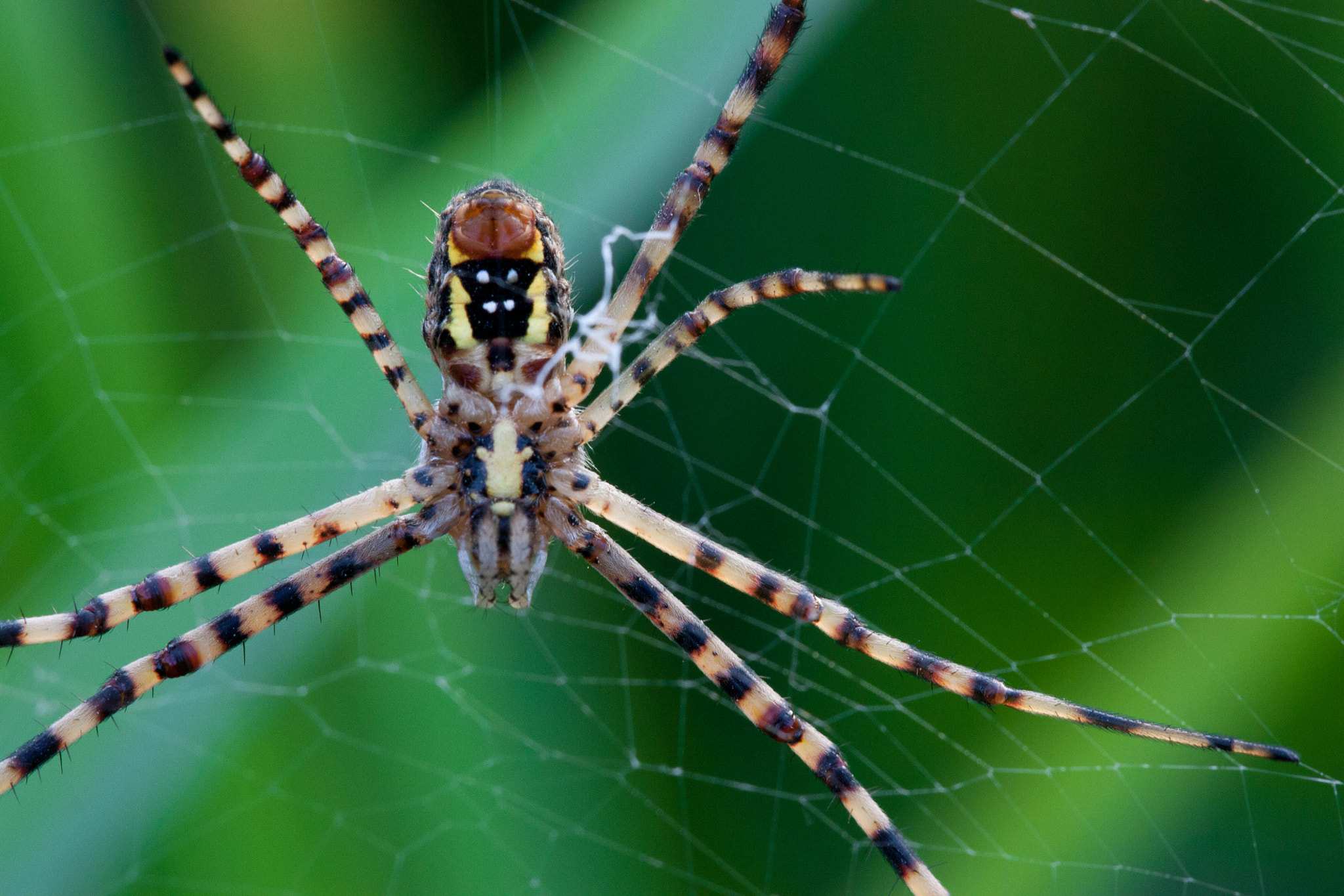 Photograph spider  by Omri Mor on 500px