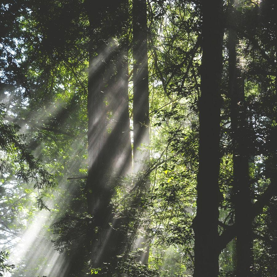 _into the woods II