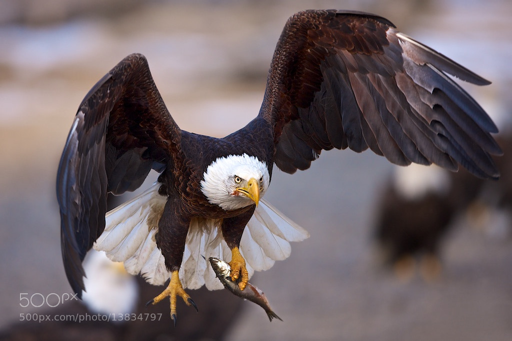 Photograph The Escape by Buck Shreck on 500px
