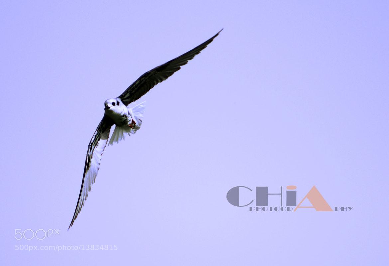 Photograph  Beautiful bird by Chia Gilli on 500px